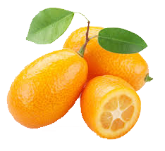 Kumquat, mandarino cinese
