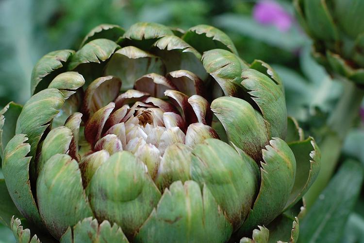 Carciofi: i benefici di una verdura di stagione buona e sana